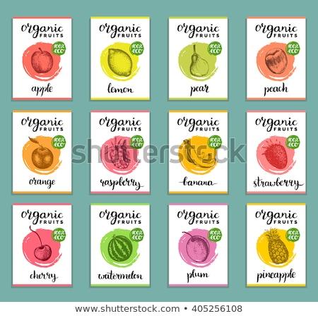 Kaart sjabloon pruim vruchten illustratie natuur Stockfoto © bluering