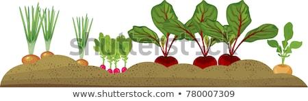 Büyüyen bahçe yatak gıda renk Stok fotoğraf © Virgin