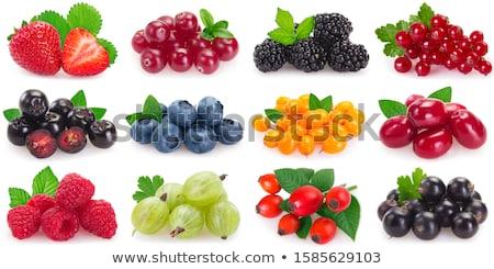 Rood · bes · vers · vruchten · bladeren · kleur - stockfoto © conceptcafe