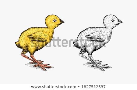 Csirke rajz ikon vektor izolált kézzel rajzolt Stock fotó © RAStudio