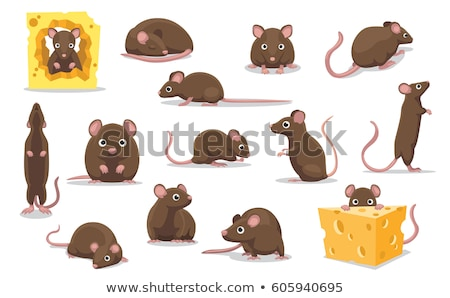 mouse and cheese rodent vector illustration stock photo © maryvalery