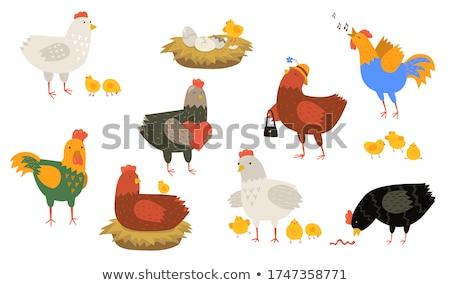 Cartoon cock with the worm Stock photo © dvarg