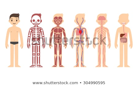 神経系 · 人体解剖学 · 脳 · モータ · ニューロン · セル - ストックフォト © robuart