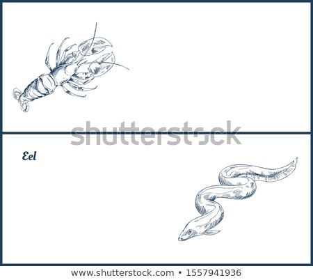 Marines créatures homard anguille atterrissage page Photo stock © robuart