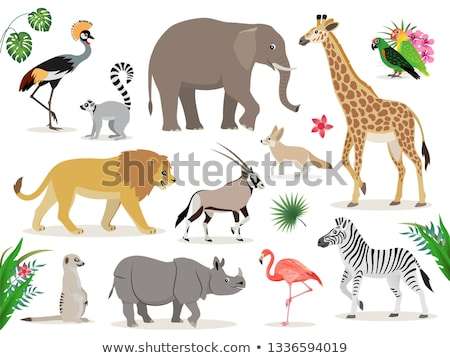 African animal, cute fennec icon isolated on white background, small funny fox, vector Stock photo © MarySan