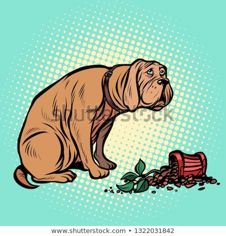 Bad dog broke a potted houseplant Stock photo © studiostoks