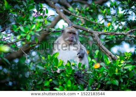 Aap wonen jungle illustratie glimlach gelukkig Stockfoto © colematt