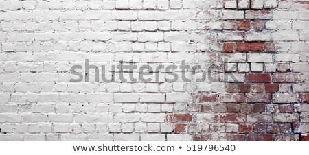 vetor · casa · proteção · isolado · branco - foto stock © colematt