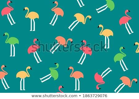 утки зеленый кадр шаблон иллюстрация фон Сток-фото © bluering