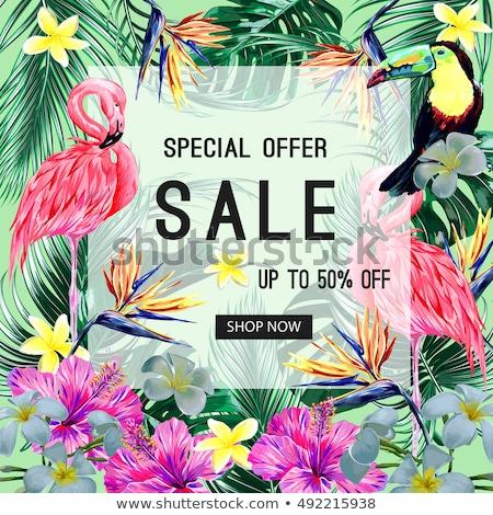 yaz · satış · dizayn · palmiye · yaprağı · matbaacılık · mektup - stok fotoğraf © articular