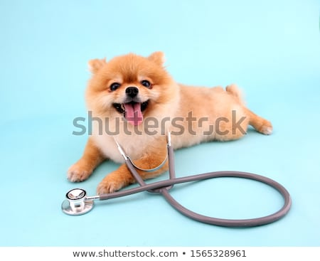 mujer · perro · terrier · propietario · blanco - foto stock © kzenon