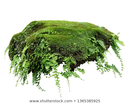 Nature background with fern, moss and stones Stock photo © dariazu