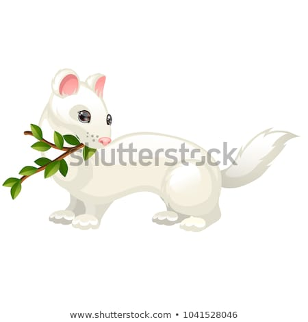 Least Weasel or Mustela nivalis and twig with leaves isolated on white background. Vector cartoon cl Stock photo © Lady-Luck