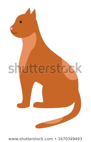 Cat Sit Calmly and Wait, Spotted Ruddy Pet Posing Stock photo © robuart