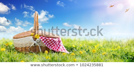 пикника луговой женщину трава Сток-фото © val_th