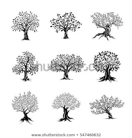 Conjunto belo magnífico oliva árvores silhueta Foto stock © designer_things