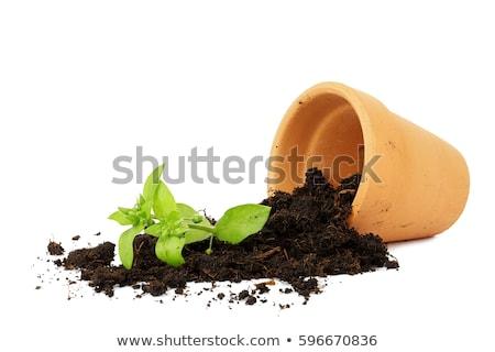 The broken pot Stock photo © sibrikov