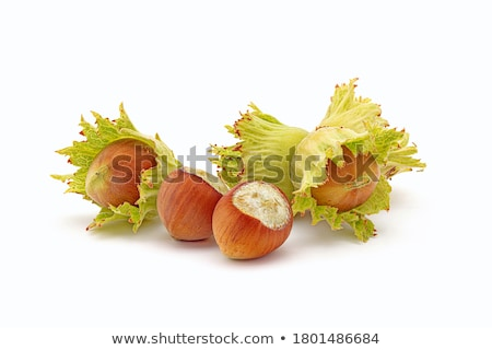 fresh hazelnuts Stock photo © ozaiachin