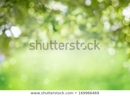 Green Background with Trees Stock photo © WaD