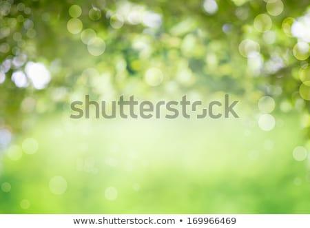 Zöld fák virágok dombok tavasz tájkép Stock fotó © WaD
