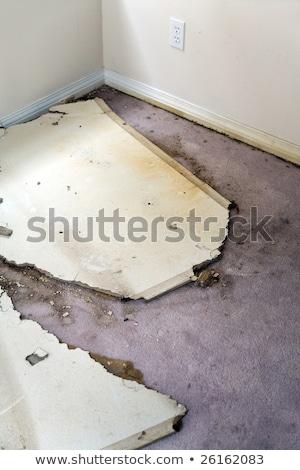 Water leaking damaged plasterboard and carpet Stock photo © devon