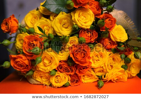 Orange and yellow rose macro Stock photo © sumners