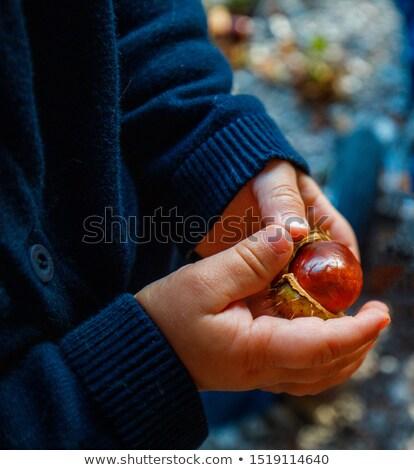 Gathering chestnuts Stock photo © photography33