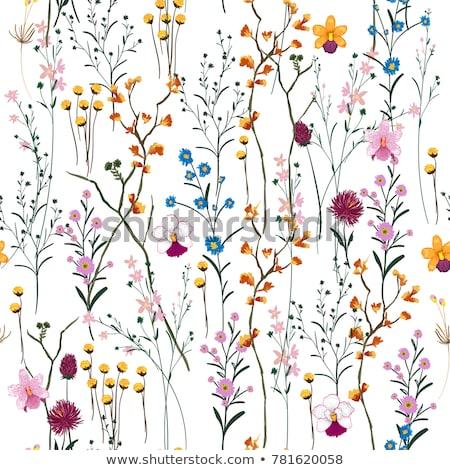 renda · flores · fronteira · preto · isolado · branco - foto stock © marimorena