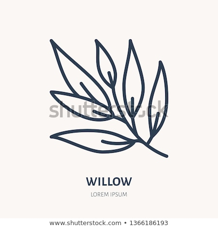 Vektor ikon fűzfa növény illusztráció Stock fotó © zzve