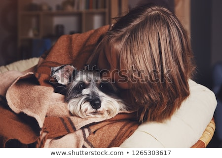 Cold nose of schnauzer dog Stock photo © fantasticrabbit
