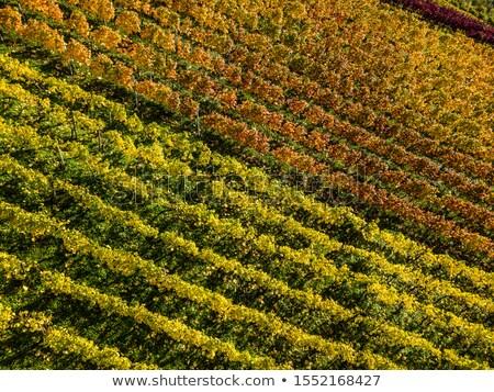 vina · empinado · mal · vino · región · alimentos - foto stock © franky242
