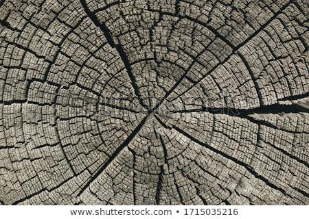 Vecchio concentrico pattern legno industria energia Foto d'archivio © Melvin07