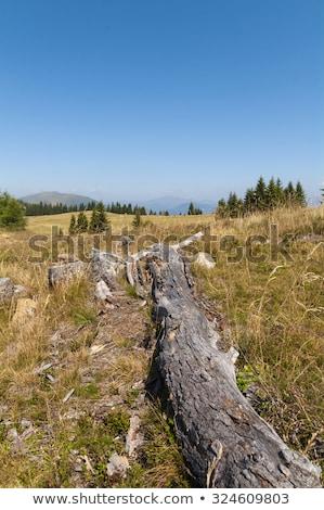 枯れ木 オーストリア 水 ツリー 森林 牛 ストックフォト © enricoagostoni