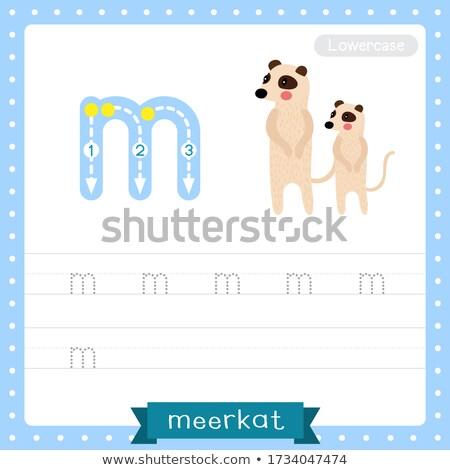 Flashcard letter M is for meerkat Stock photo © bluering