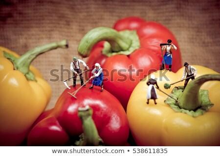 Miniatura raccolta campana peperoni farm Foto d'archivio © Kirill_M