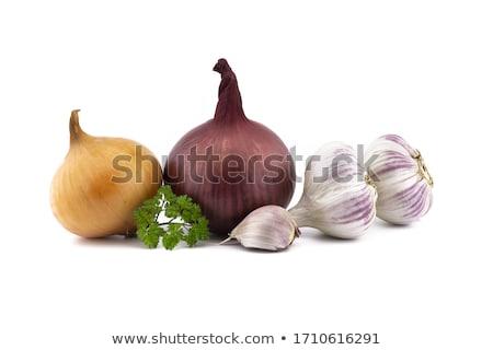 Сток-фото: чеснока · белый · изолированный · реалистичный · иллюстрация · кухне