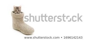küçük · kemirgen · veteriner · gülümseme · çalışmak · sağlık - stok fotoğraf © popaukropa