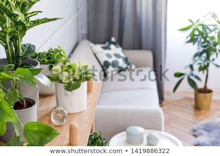 Gr nen pflanzen holztisch einfache home for Pflanzen innenraum
