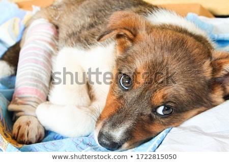 Ferido noivo perna quebrada asiático noivo muletas Foto stock © RAStudio