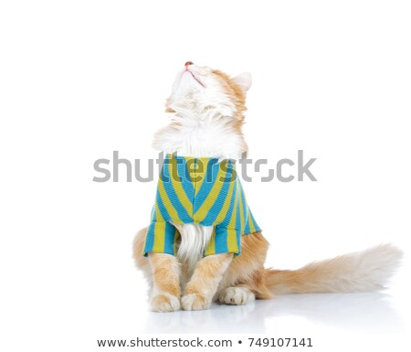 seated dressed cat looks up to something  Stock photo © feedough
