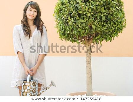 Plantas patio mesa atención crecimiento Foto stock © IS2