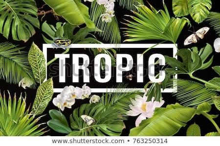 tropic horizontal banner stock photo © purplebird