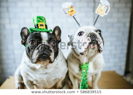 St Patricks Pets Background Stock photo © Lightsource