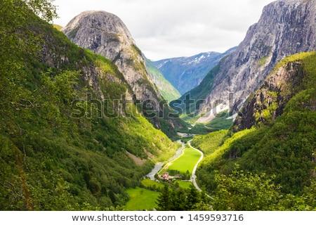Forest on the mountainside, Norway Stock photo © Kotenko