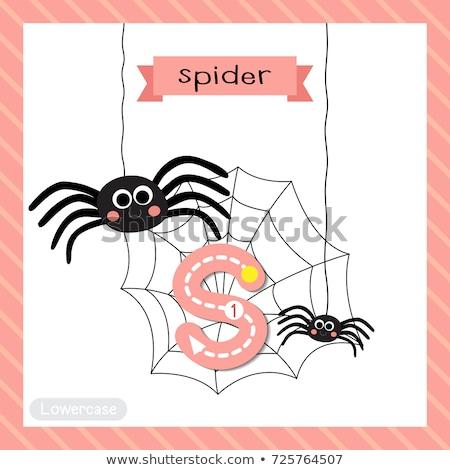 Mektup örümcek beyaz arka plan eğitim okuma Stok fotoğraf © colematt