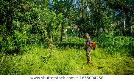 Mezőgazdasági gép erdő növényzet park dolgozik Stock fotó © robuart