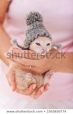 Cute kitten warming up after bath - wearing a woolen hat Stock photo © ilona75