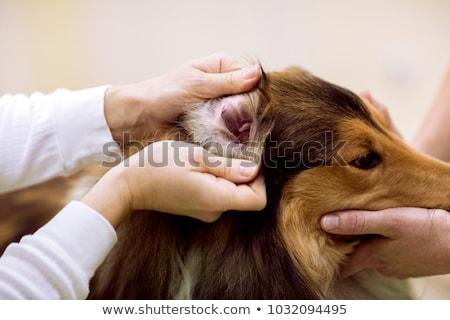 fül · vizsgálat · kép · orvos · megvizsgál · fiatal · lány - stock fotó © kzenon