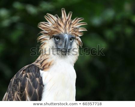 Tropical birds in the Philippines Stock photo © galitskaya