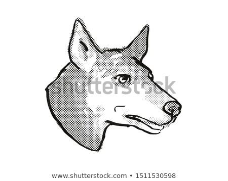Australian Kelpie Dog Breed Cartoon Retro Drawing Stock photo © patrimonio